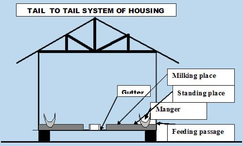housing for cow