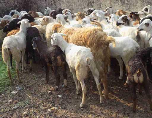 SHEEP FARM PROJECT REPORT
