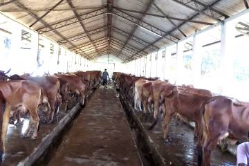 dairy farming project report for 2 4 8 10,20,50,cows,farming